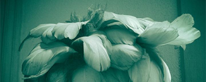header-de-tere-bloemen-van-het-verstand